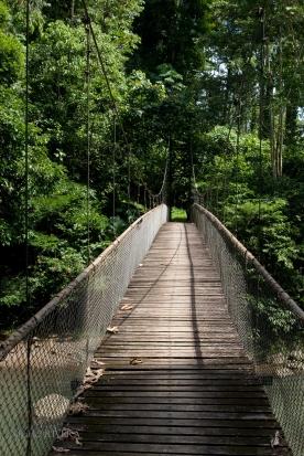 Jungle Pathways