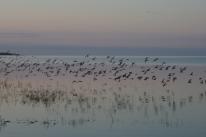 birds dani
